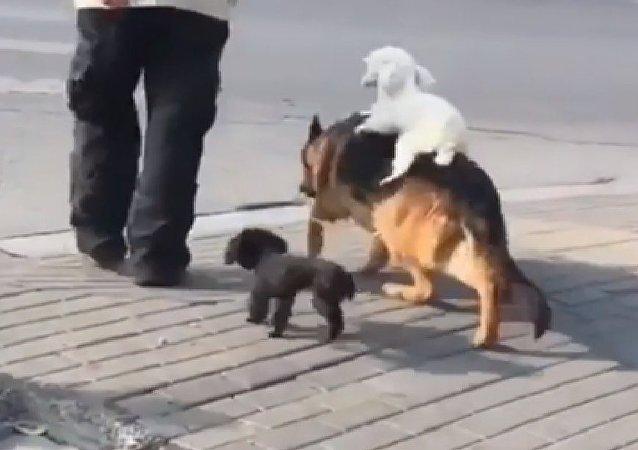 Amizade canina no trânsito