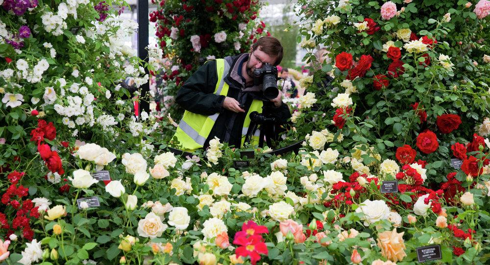 Flores no concurso Chelsea Flower Show 2015 em Londres
