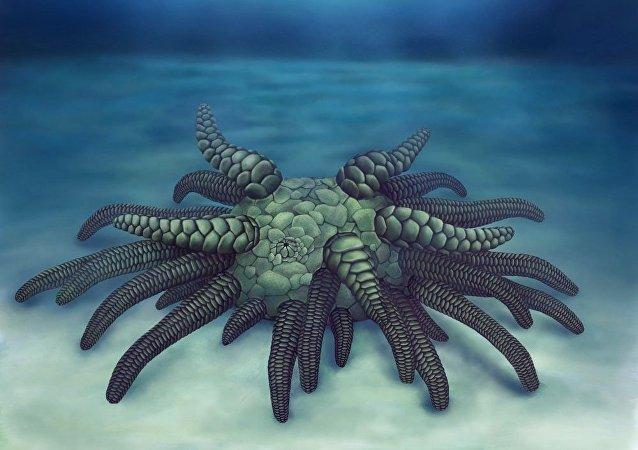 Sollasina cthulhu (imagem ilustrativa)