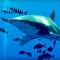 Pega-pega submarino: tubarão atinge mergulhador e o morde