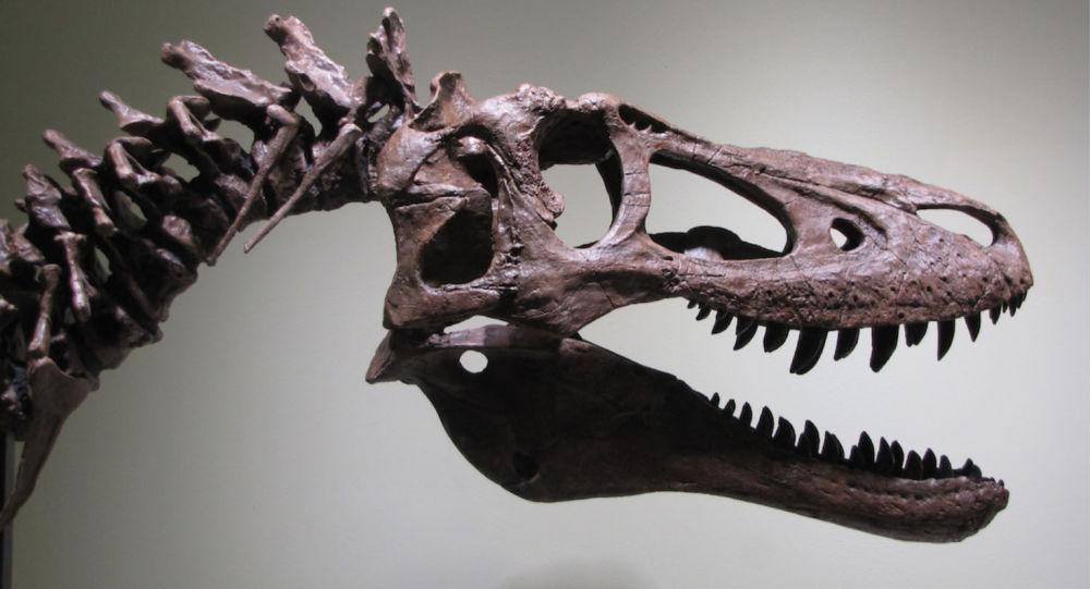 Esqueleto de tiranossauro jovem está à venda no eBay