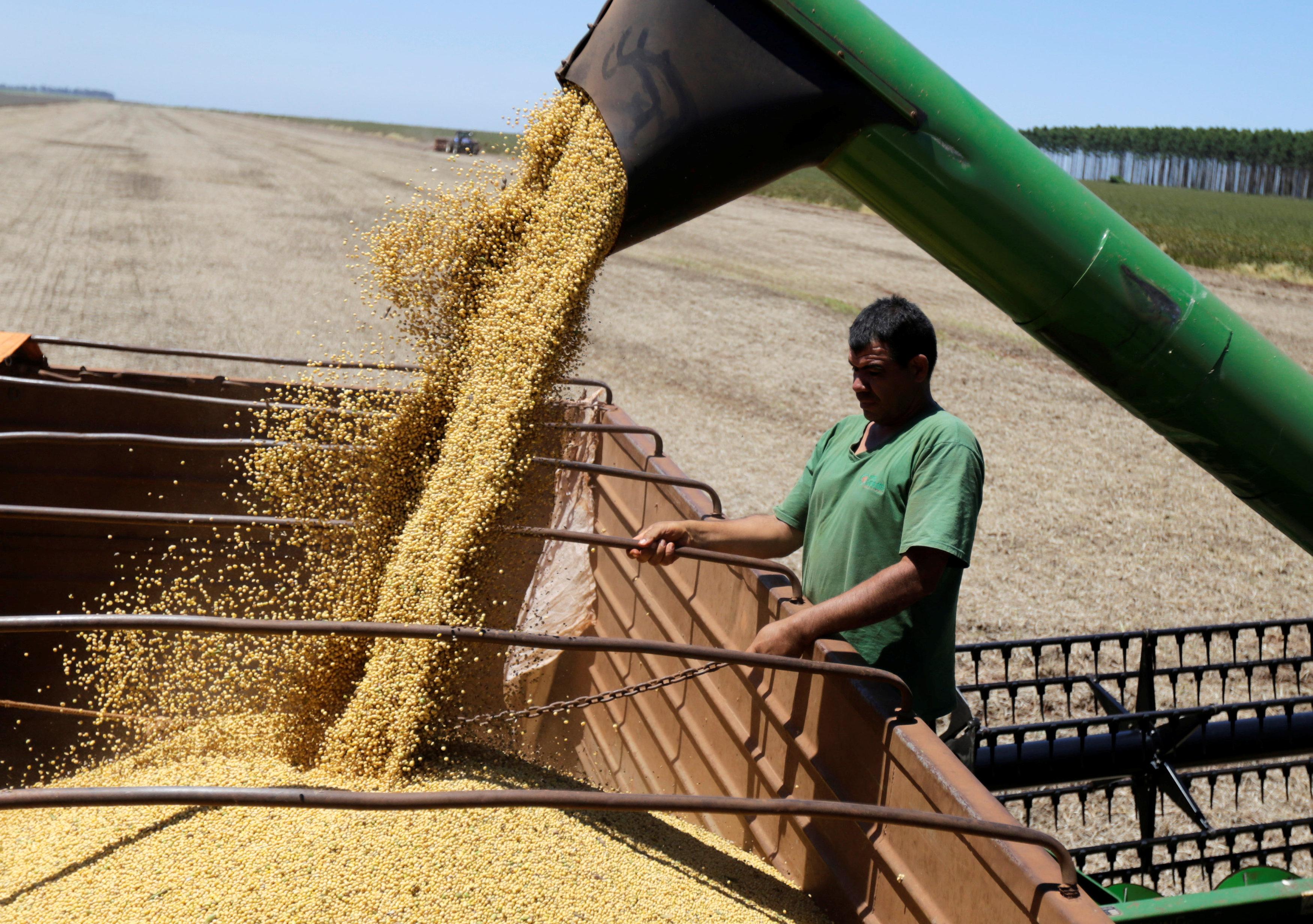 Colheita de safra de soja no Brasil (foto de arquivo)