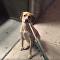 Cachorra faz pirraça em frente a pet shop em Nova York
