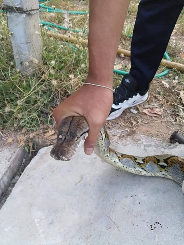 Cobra capturada na Tailândia (imagem referencial)