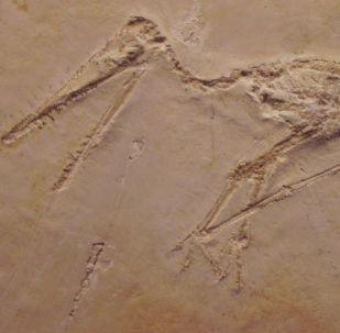 Pegada de pterossauro