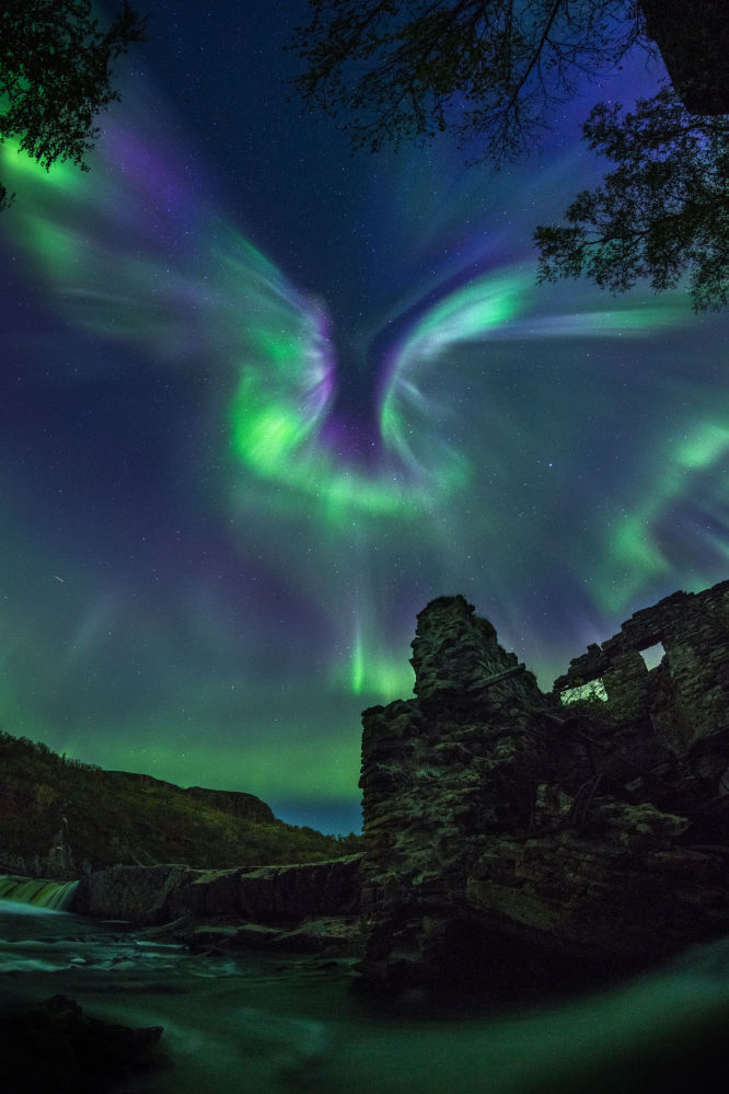 Aurora é um pássaro do fotógrafo russo Aleksandr Stepanenko