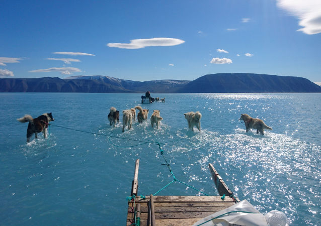 Cachorros puxam trenó sobre o gelo coberto por água na Groenlândia