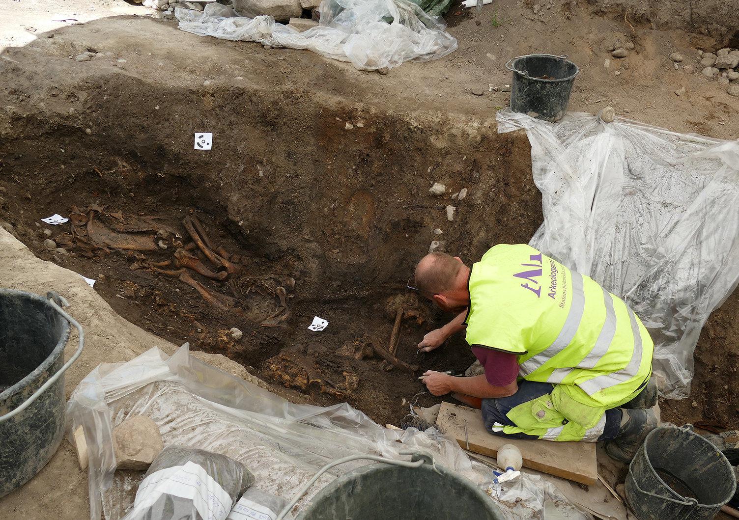 Osteólogo Ola Magnell desenterra os esqueletos de cavalo e cachorro