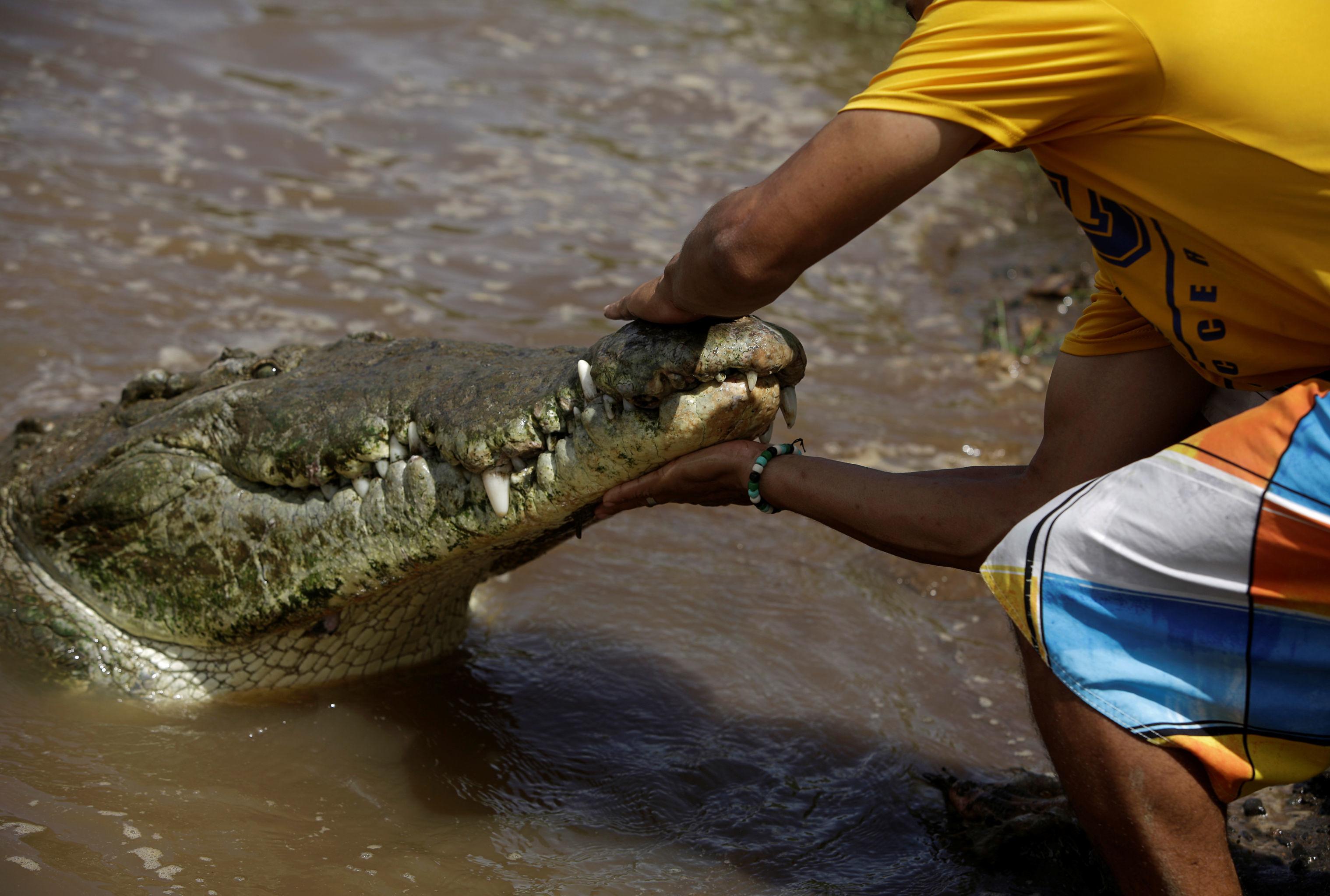 Juan Cerdas tocando no focinho do crocodilo