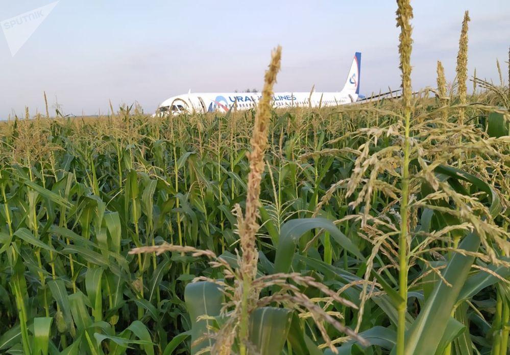 Avião após pouso forçado em uma plantação de milho
