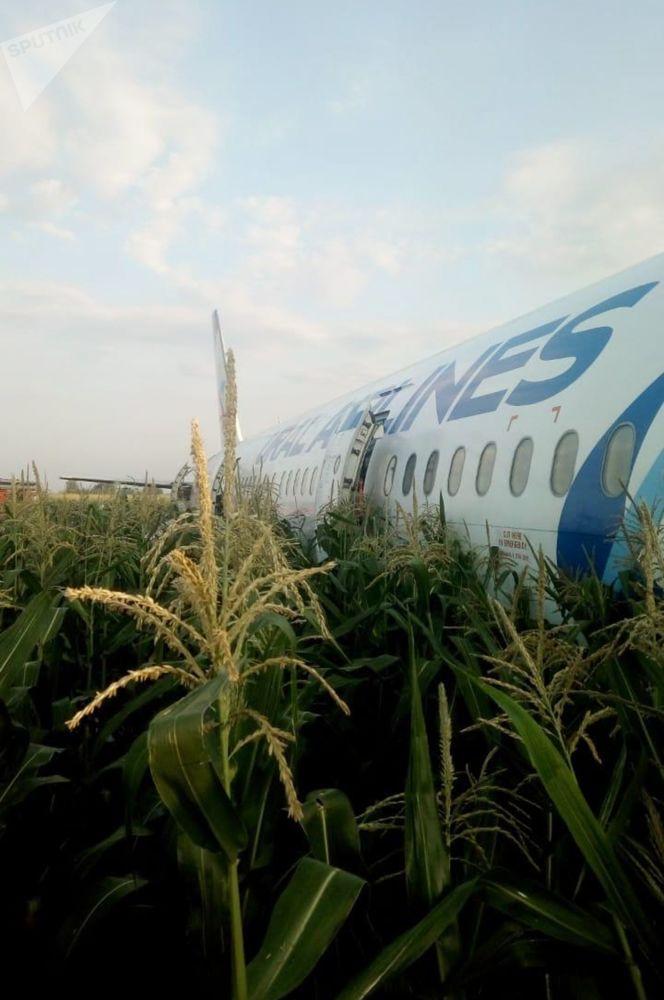 Avião realizou pouso de emergência em uma plantação com trem de pouso fechado