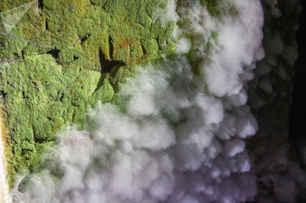 Mofo nas paredes