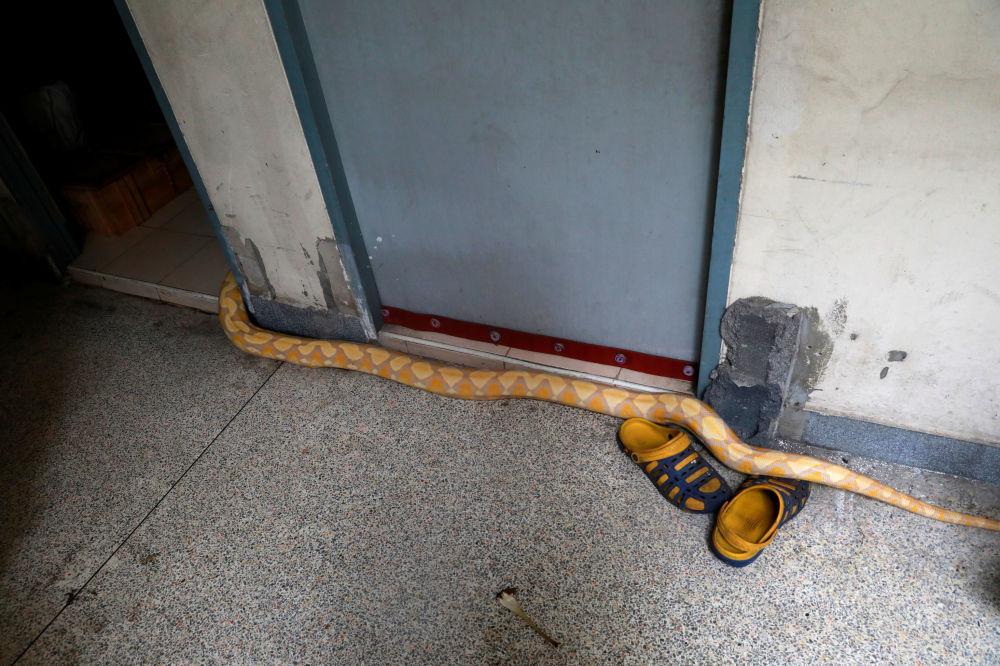 Píton avistada no quartel dos bombeiros na Tailândia