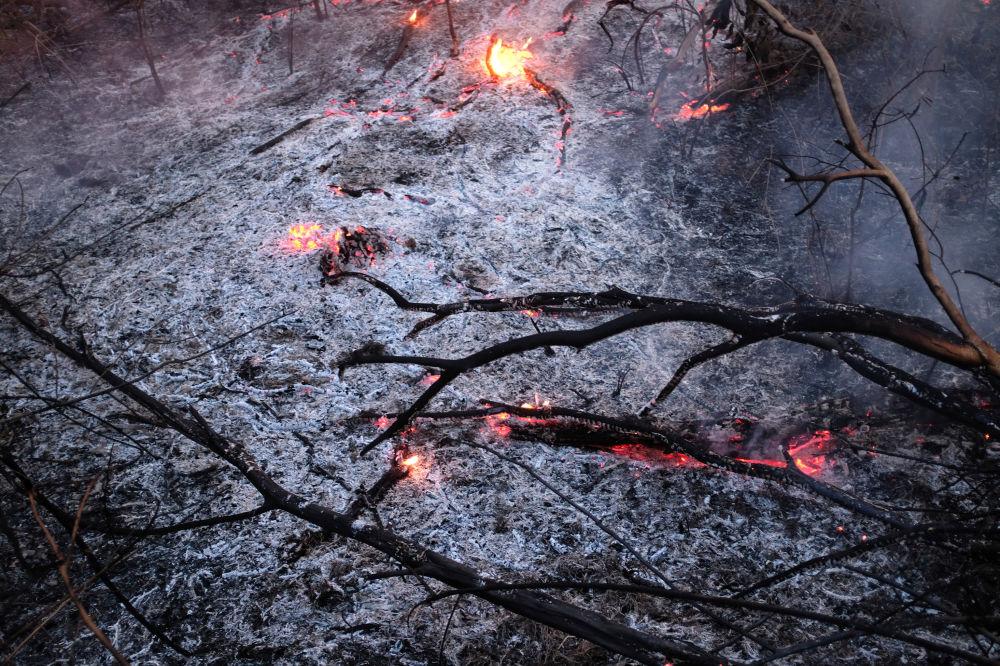 Ramos queimados na maior floresta tropical do mundo