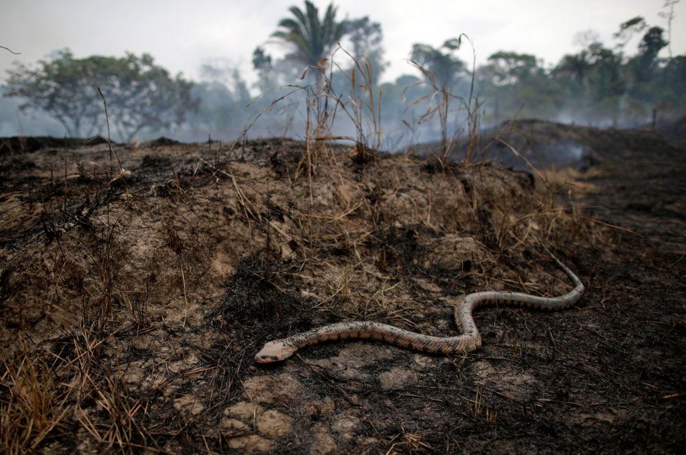 Consequências dos incêndios florestais na região amazônica brasileira