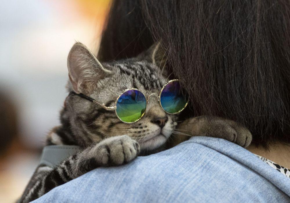Um gato de óculos no ombro de seu dono durante a feira Pet Expo Championship em Bangcoc, Tailândia