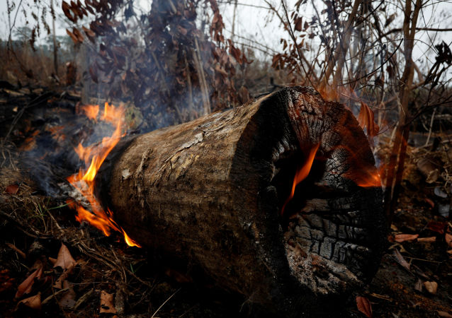 Árvores queimadas durante os incêndios florestais na Amazônia (imagem ilustrativa)
