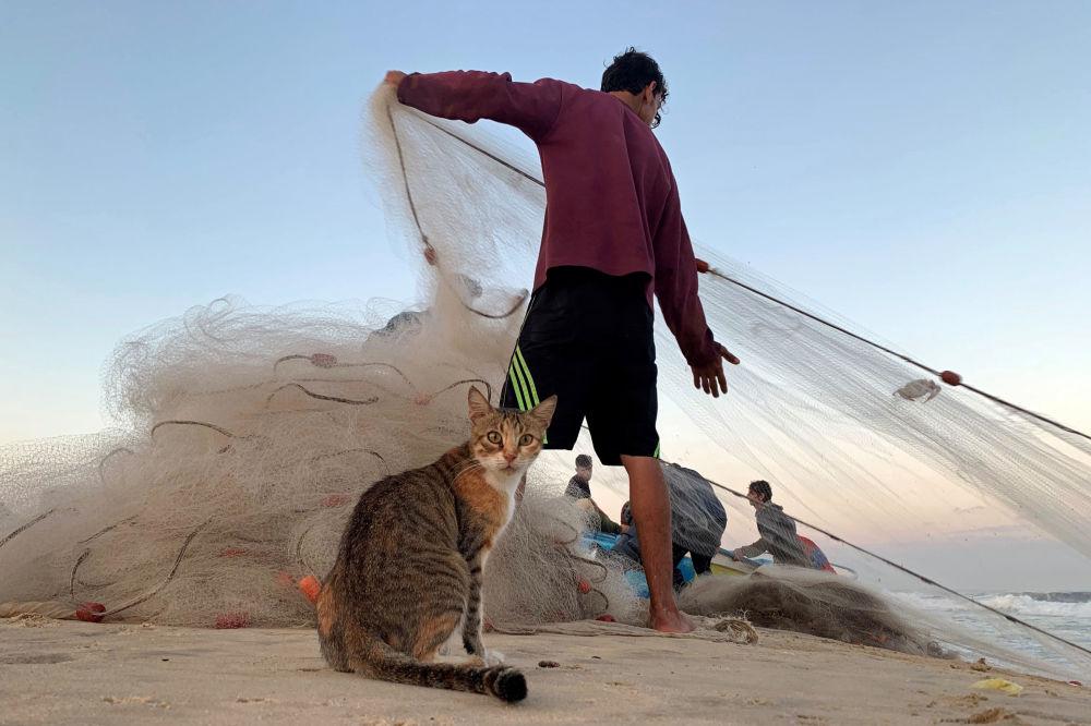 Gato olha um pescador palestino puxando sua rede em uma praia no norte da Faixa de Gaza, em 23 de setembro de 2019