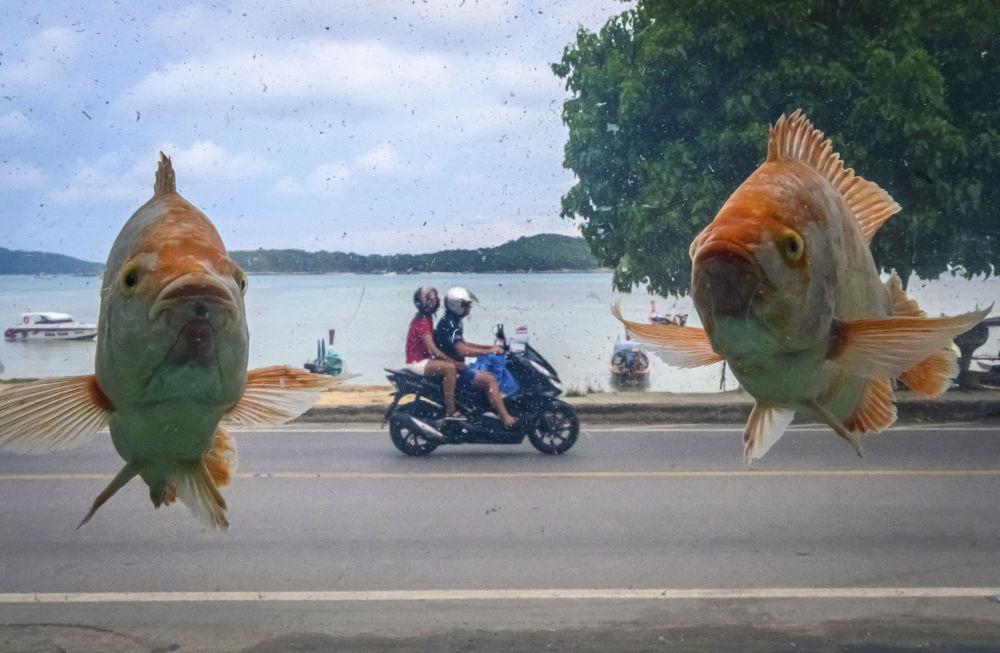 Foto da praia de Ra Wai através do vidro de aquário com peixes, na ilha de Phuket, Tailândia