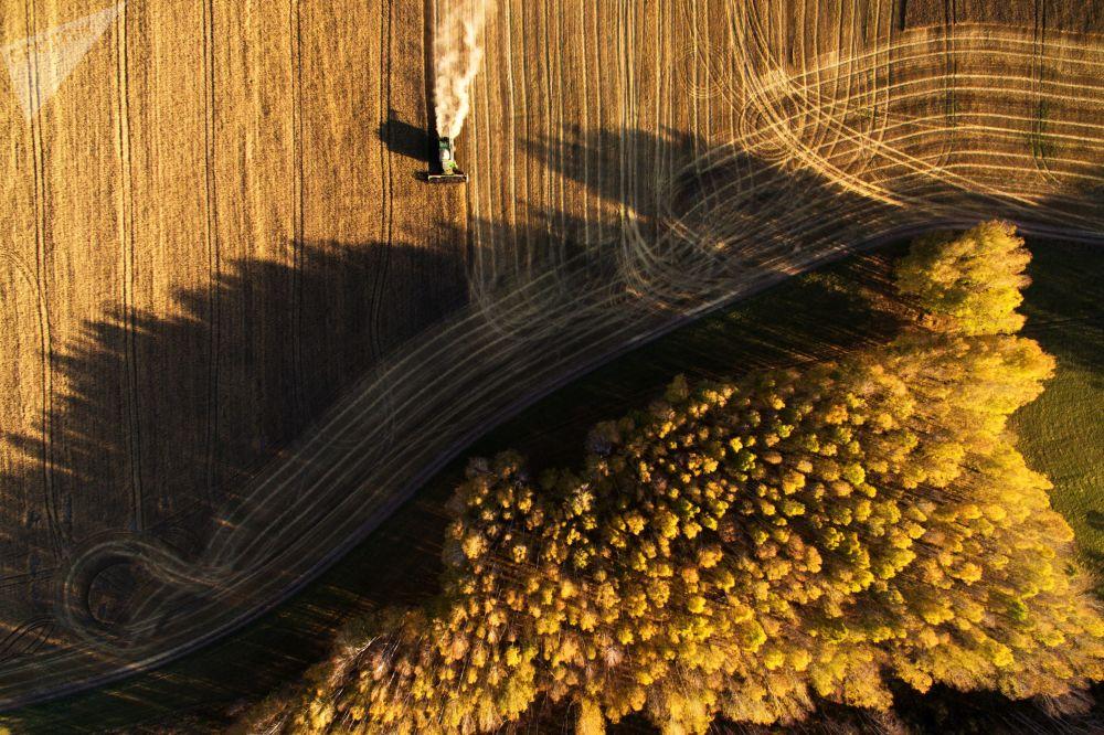 Colheita de cereais na região de Novossibirsk, na Rússia