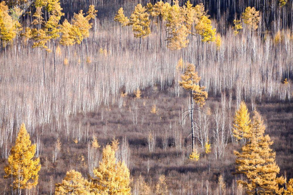 Floresta de Outono na região de Transbaikal, Rússia