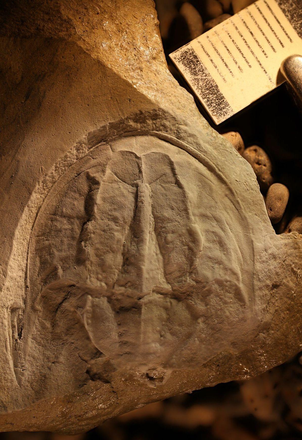 O fóssil, pertencente à coleção da Universidade da Tasmânia