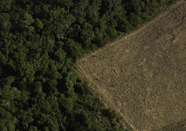 Terreno desmatado e queimado é visto na floresta Amazônica nos arredores de Porto Velho, em Rondônia