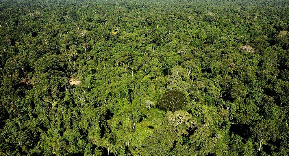 Vista aérea da reserva florestal amazônica de Trairao, no Pará, Brasil