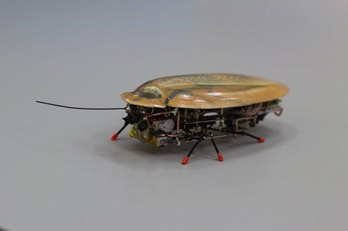 Barata-robô russo