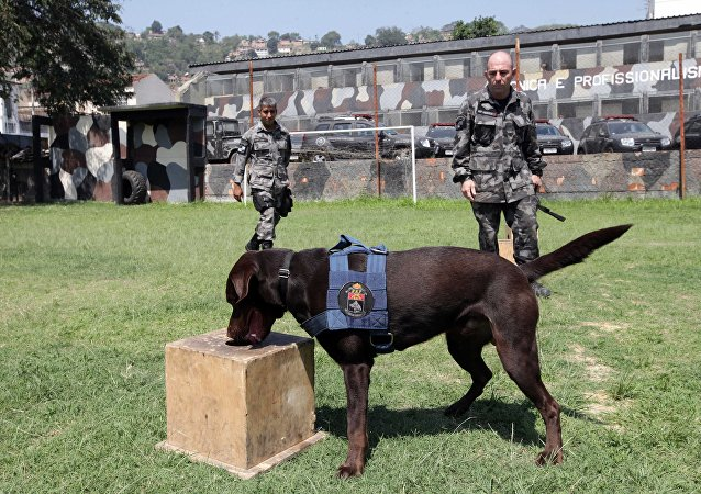 Treinamento com cães farejadores de explosivos