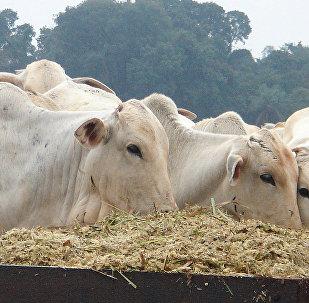 Segundo especialista, Brasil e Rússia vivem momento de grande estabilidade no comércio de proteína animal