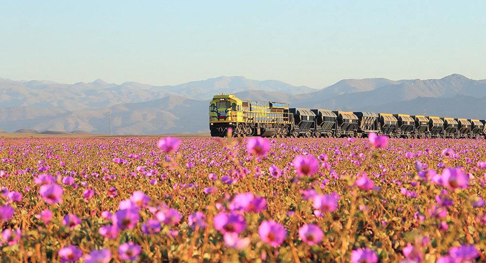 Milagre Da Natureza Deserto Se Torna Um Tapete De Flores Sputnik
