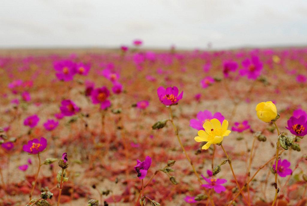 O deserto de Atacama, Chile