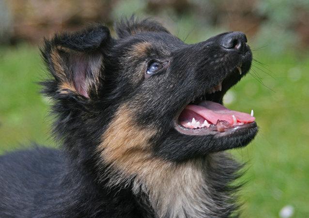 Ministro do Interior da França prometeu que a cadela russa será muito bem recebida em seu novo país (imagem meramente ilustrativa)