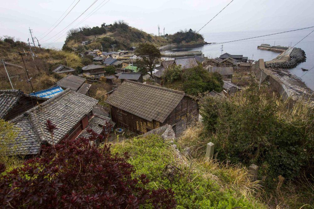 Conheça a Ilha dos Gatos, no Japão