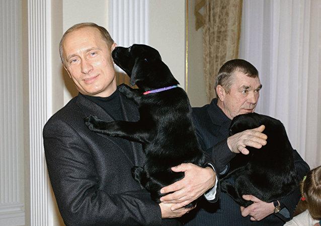 Vladimir Putin presenteou a estudante Anna Abramova, de 11 anos, com um filhote de labrador