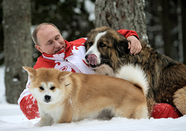 Presidente russo, Vladimir Putin, brincando com seus cachorros Buffy e Yume, em 24 de março de 2013