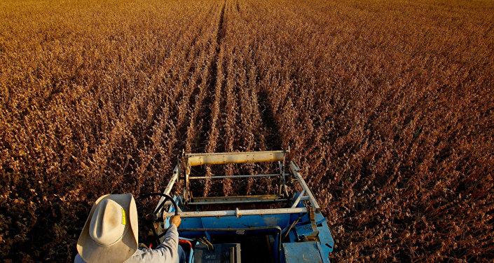 Plantação de soja.