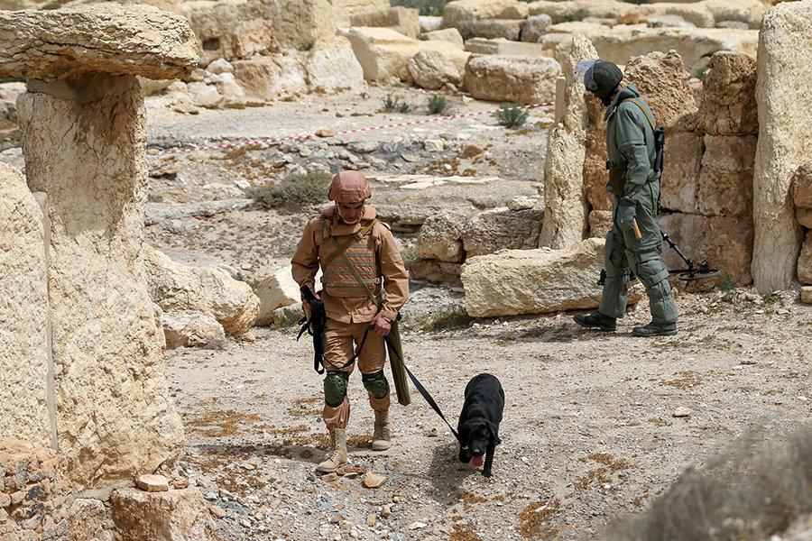 Especialistas usam cachorros no processo de desminagem em Palmira