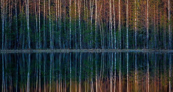 O reflexo de floresta num lago