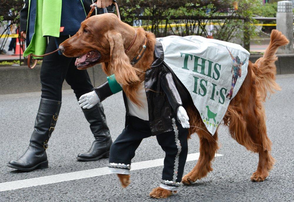 Um cão vestido de Michael Jackson participa de um desfile em Tóquio, Japão