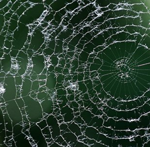 Teia de aranha em uma varanda em Bratislava, Eslováquia, maio de 2011 (foto de arquivo)