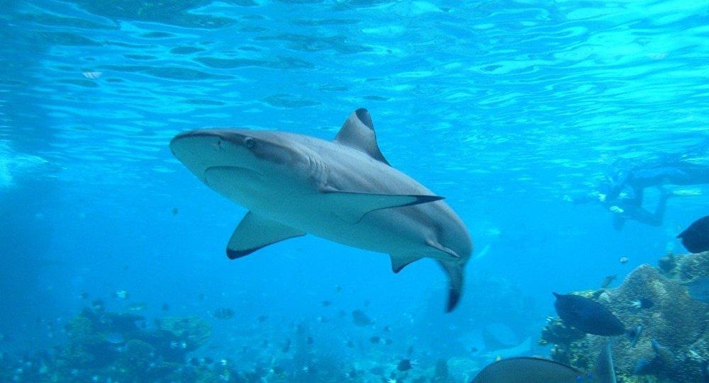Tubarão (imagem ilustrativa)