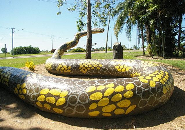 A cobra pitão
