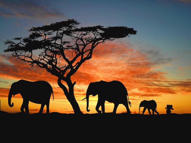 Elefante de pelúcia passa um tempo visitando sua família