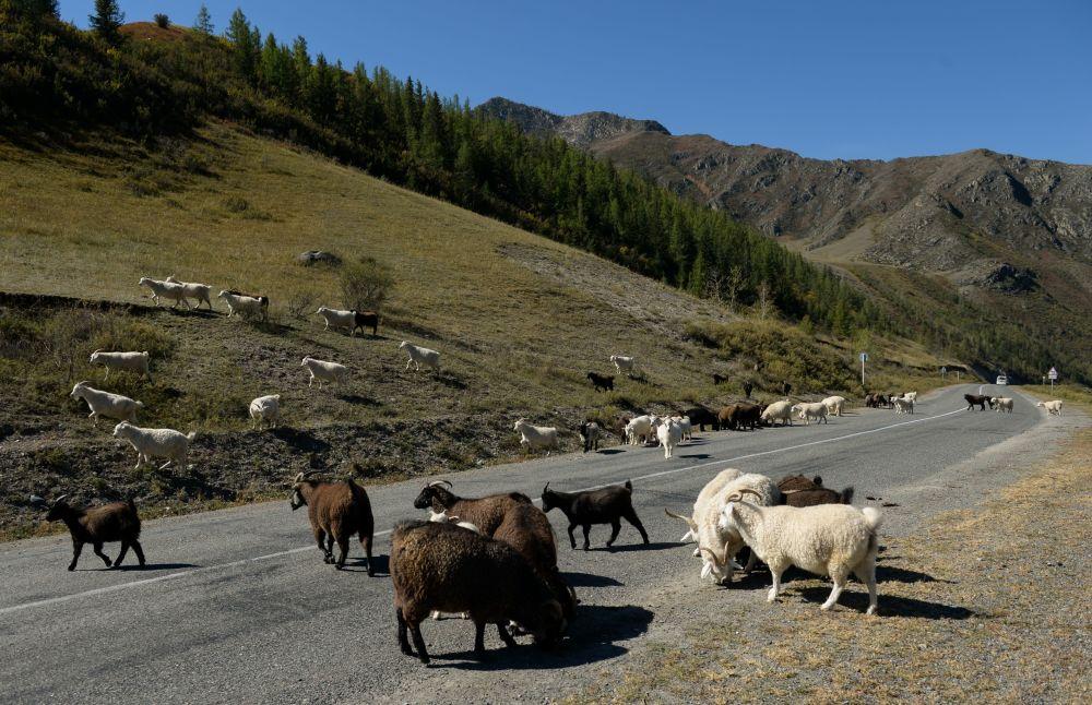 Via federal Chuisky na região de Altai