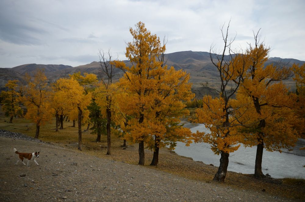 Paisagens de tirar o fôlego da região de Altai