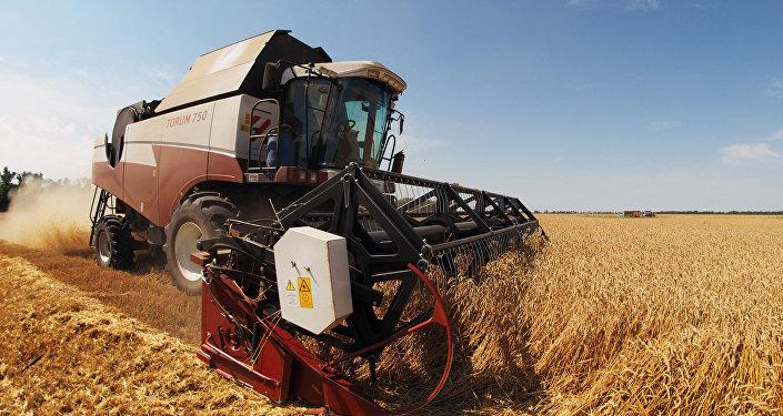 Colheita de trigo na região de Krasnodar, Rússia