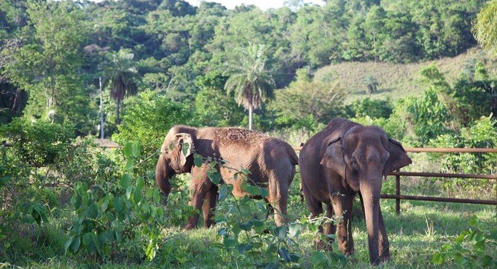 Maia (esq) e Guida (dir) chegaram ao Santuário de Elefantes Brasil.