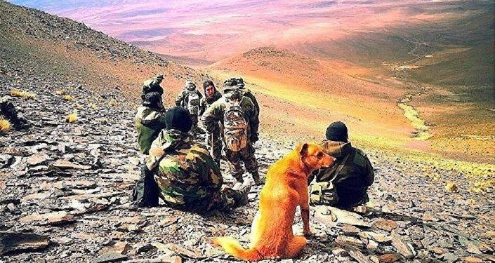 Cão Cabo servindo junto com Exército argentino